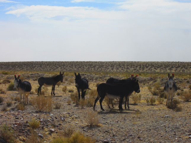 donkeys-road-to-susques.JPG