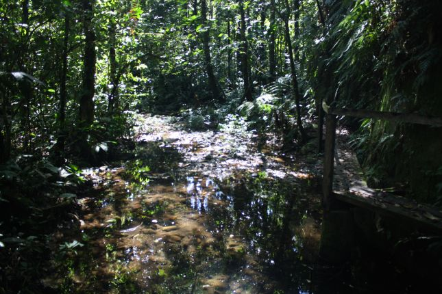jungle-parque-carrasco.JPG