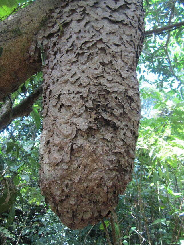 termites-parque-carrasco.JPG