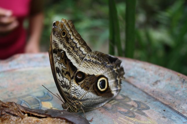butterfly-sanctuary-machu-picchu-1.JPG