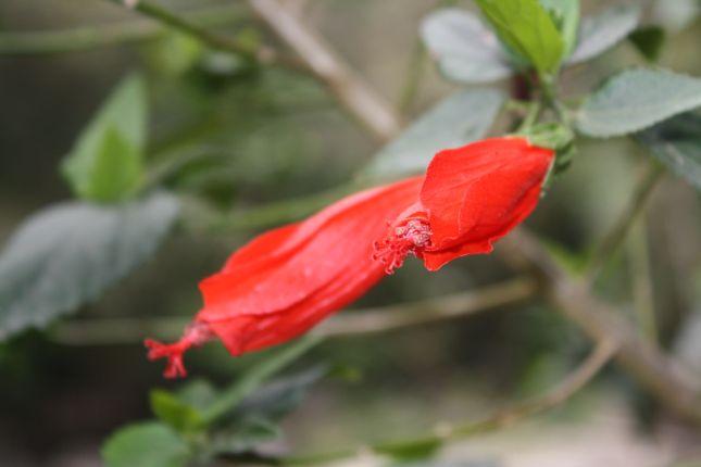 flora-machu-picchu-1.JPG