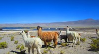 BORDER CROSSING from CHILE to BOLIVIA SALAR DE UYUNI