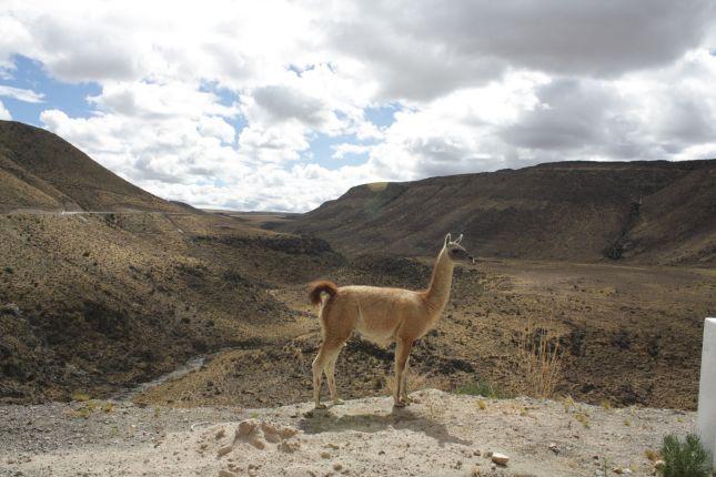 mountain-pass-nazca-puquio-llama.JPG
