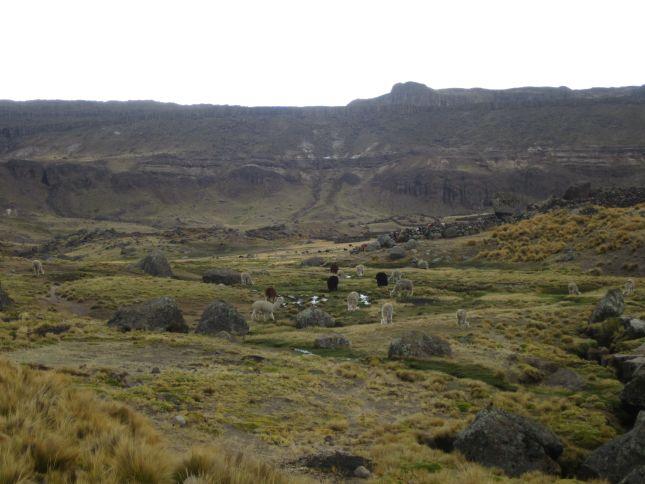 mountian-pass-puquio-abancay-alpaca.JPG