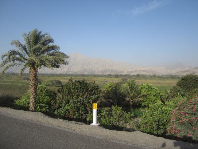 nazca-oasis.JPG