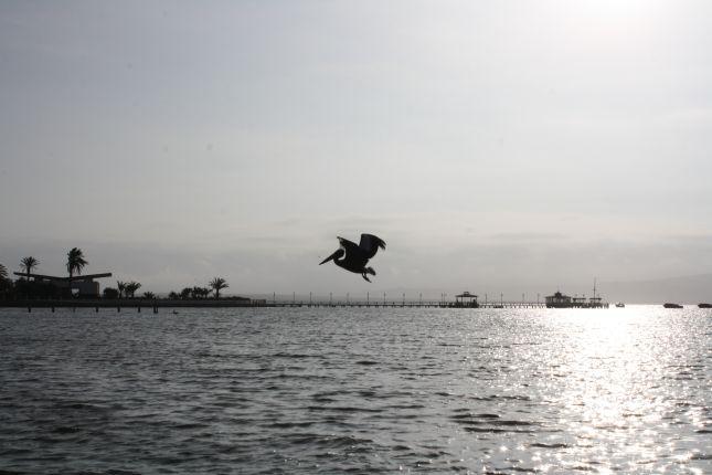 paracas-seafront-pelican.JPG