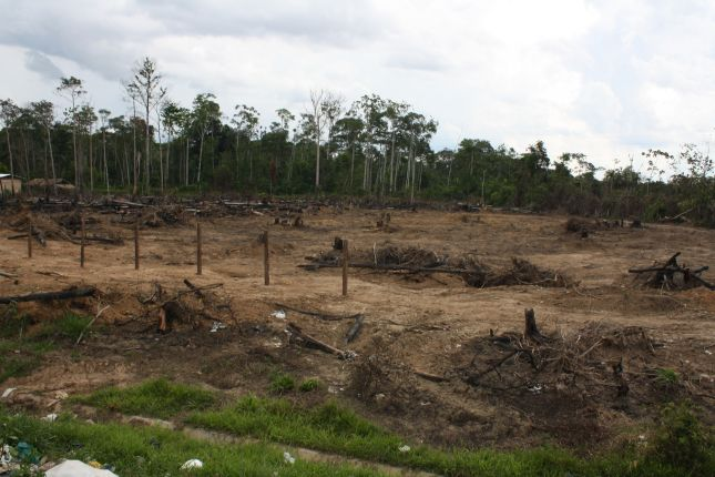 deforestation-near-puerto-maldonado-1.JPG