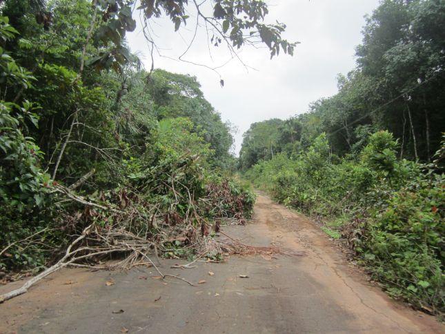 fallen-trees-BR319.JPG