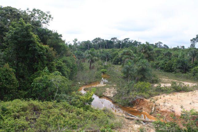jungle-scene-BR319.JPG