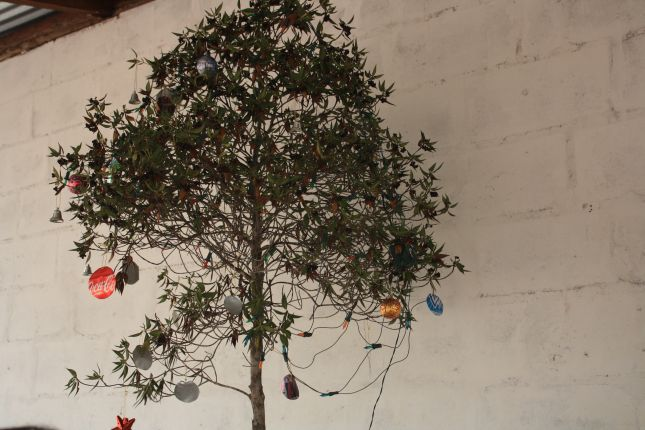 gran-sabana-bodega-xmas-tree.JPG