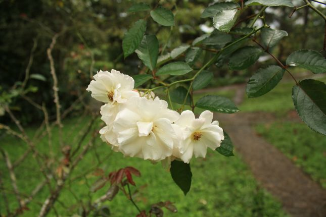 campo-claro-flora-2.JPG