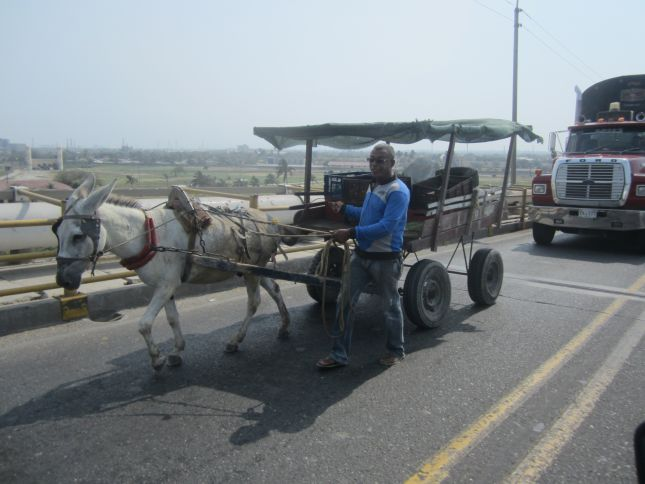 cartagena-donkey-cart.JPG