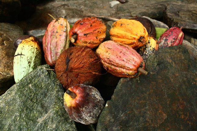 chez-gloria-cacao-pods.JPG