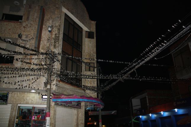 puerto-berrio-birds-on-the-wire.JPG
