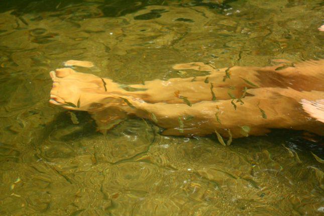 quebrada-valencia-bathing-fish.JPG